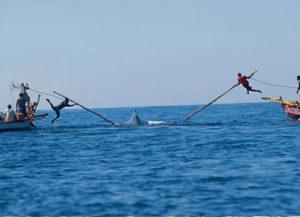 whalehunting